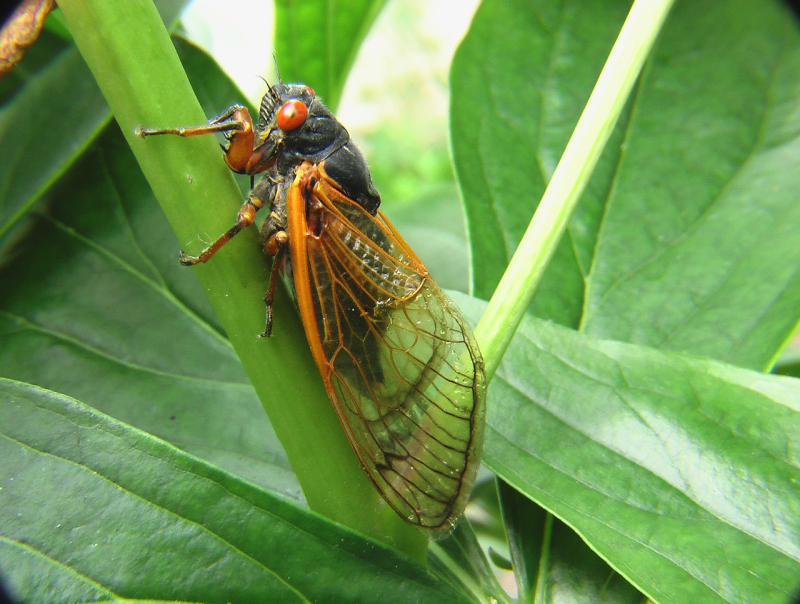 Insect-3782610_1280